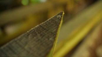 Mill Spider