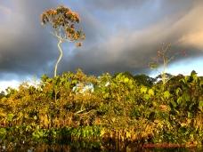 Yasuni Ecuador