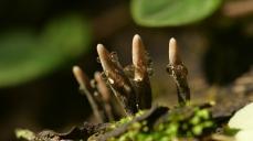 Macro Mushrooms